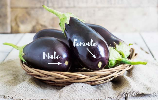 Male and Female Eggplants
