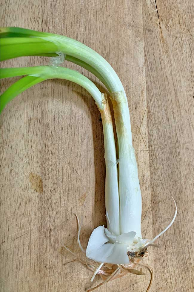 Two plants inside sprouted onion